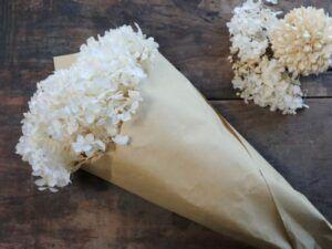 Tørret Hortensia Blomst creme
