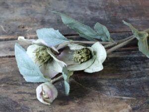 Chic Antique Fleur julerose