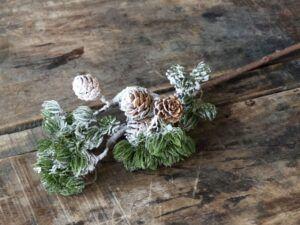 Fleur Cedertræsgren med kogler