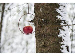 Spyd til fuglefoderkugle