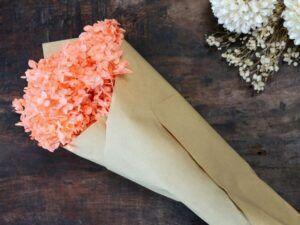 Tørret Hortensia Blomst Koral